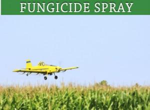 fungicide-spray